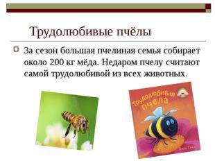 Трудолюбивые пчёлы За сезон большая пчелиная семья собирает около 200 кг мёд