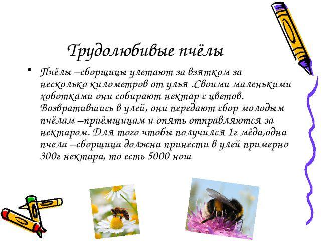 Трудолюбивые пчёлы Пчёлы –сборщицы улетают за взятком за несколько километров...