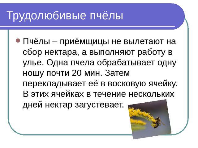 Трудолюбивые пчёлы Пчёлы – приёмщицы не вылетают на сбор нектара, а выполняют...