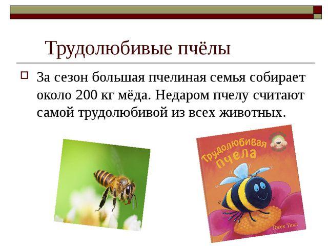 Трудолюбивые пчёлы За сезон большая пчелиная семья собирает около 200 кг мёд...
