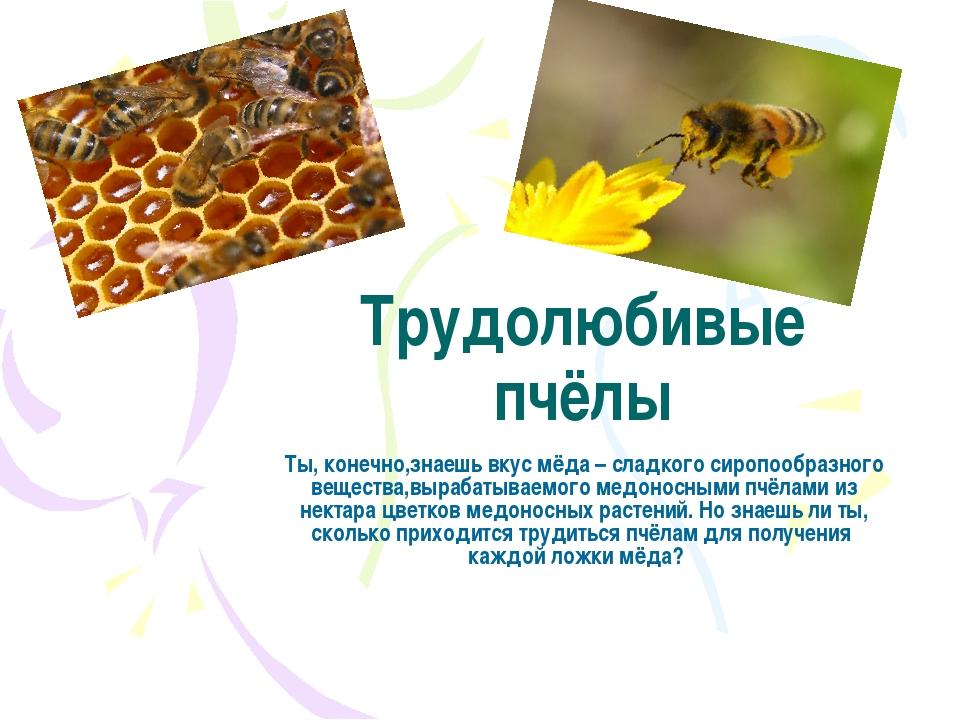 Трудолюбивые пчёлы Ты, конечно,знаешь вкус мёда – сладкого сиропообразного ве...