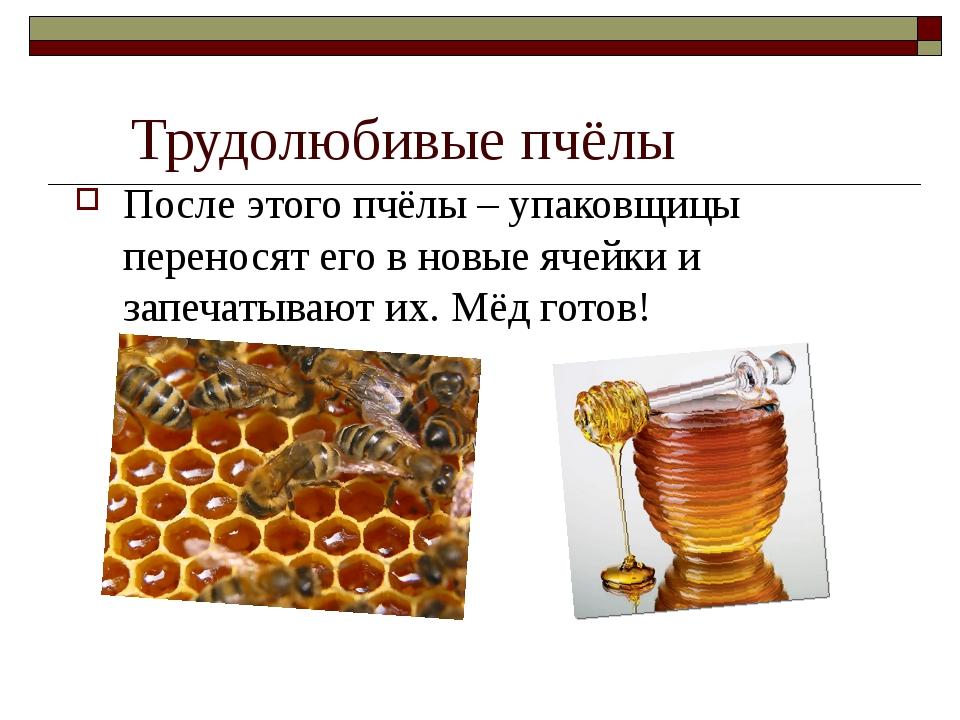 Трудолюбивые пчёлы После этого пчёлы – упаковщицы переносят его в новые ячей...