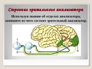 Строение зрительного анализатора Используя знания об отделах анализатора, зап