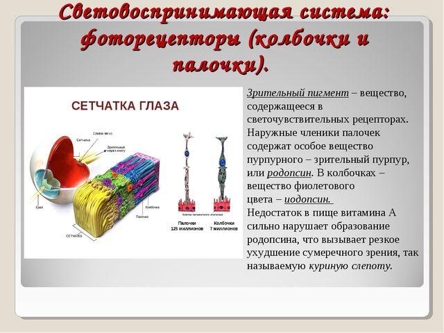 Световоспринимающая система: фоторецепторы (колбочки и палочки). Зрительный п...