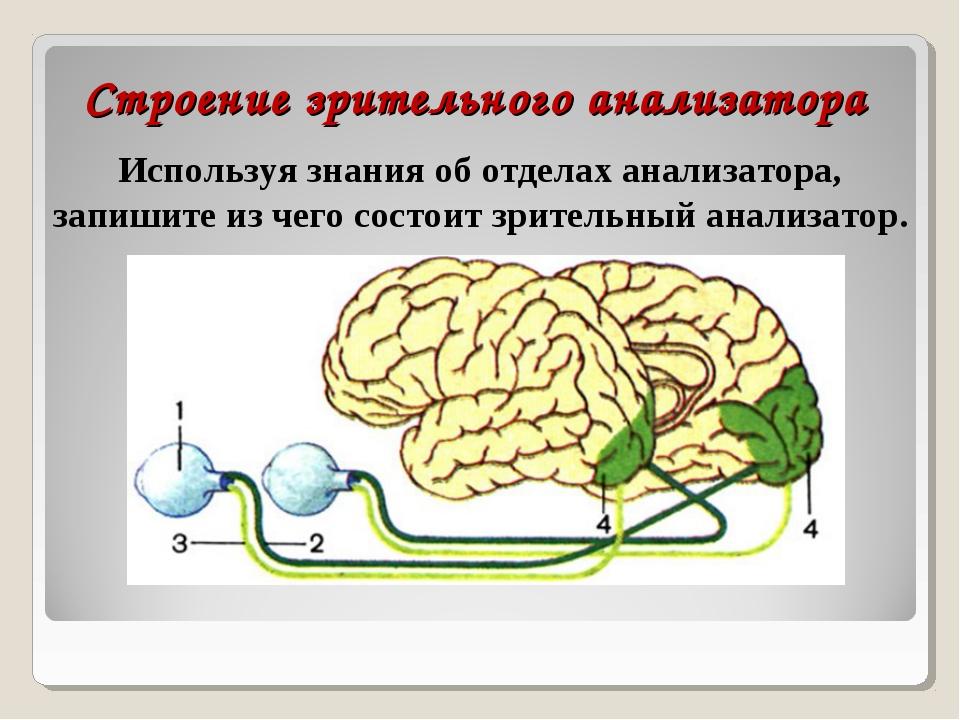 Строение зрительного анализатора Используя знания об отделах анализатора, зап...