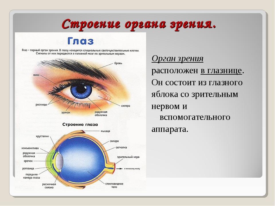 Строение органа зрения. Орган зрения расположенв глазнице. Он состоит изгл...