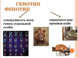 ГЕНОТИП ФЕНОТИП совокупность всех генов отдельной особи совокупность всех пр