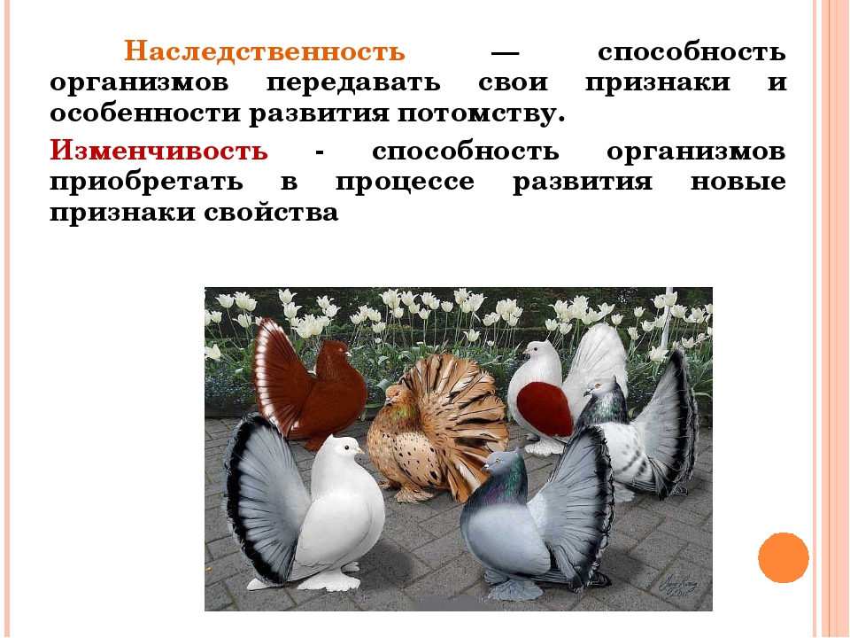 Наследственность — способность организмов передавать свои признаки и особен...