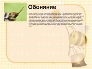 Обоняние Можно сказать, что пчелы - 'чемпионы' по обонянию. Они в 1 тыс. раз
