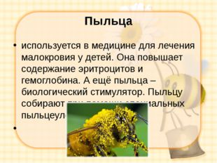 Пыльца используется в медицине для лечения малокровия у детей. Она повышает с