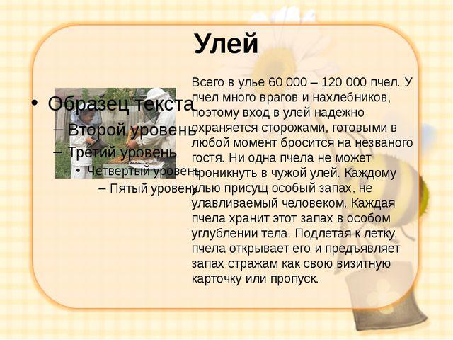 Улей Всего в улье 60 000 – 120 000 пчел. У пчел много врагов и нахлебников, п...