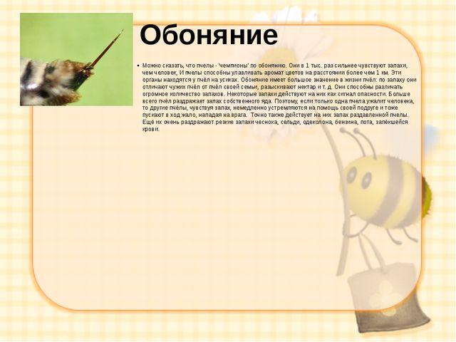 Обоняние Можно сказать, что пчелы - 'чемпионы' по обонянию. Они в 1 тыс. раз...