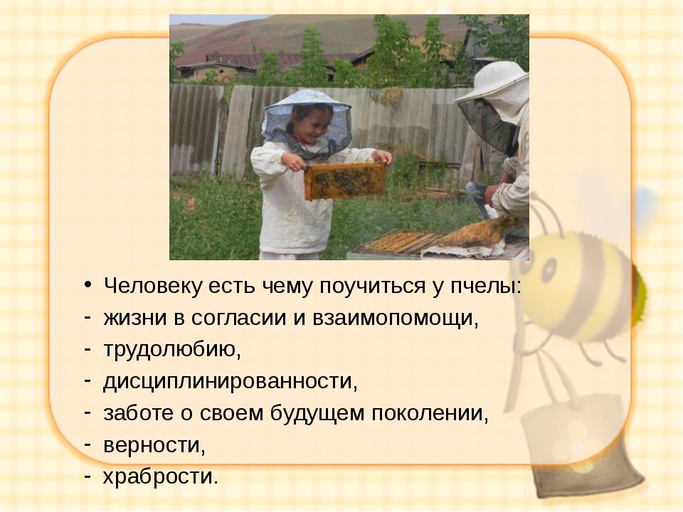 Человеку есть чему поучиться у пчелы: жизни в согласии и взаимопомощи, трудо...