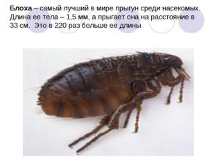 Блоха – самый лучший в мире прыгун среди насекомых. Длина ее тела – 1,5 мм, а
