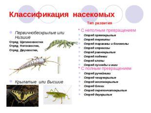 Классификация насекомых Первичнобескрылые или Низшие Отряд Щетинохвостки Отря