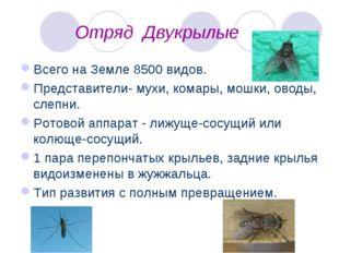 Отряд Двукрылые Всего на Земле 8500 видов. Представители- мухи, комары, мошк