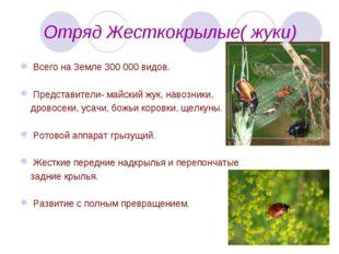 Отряд Жесткокрылые( жуки) Всего на Земле 300 000 видов. Представители- майск
