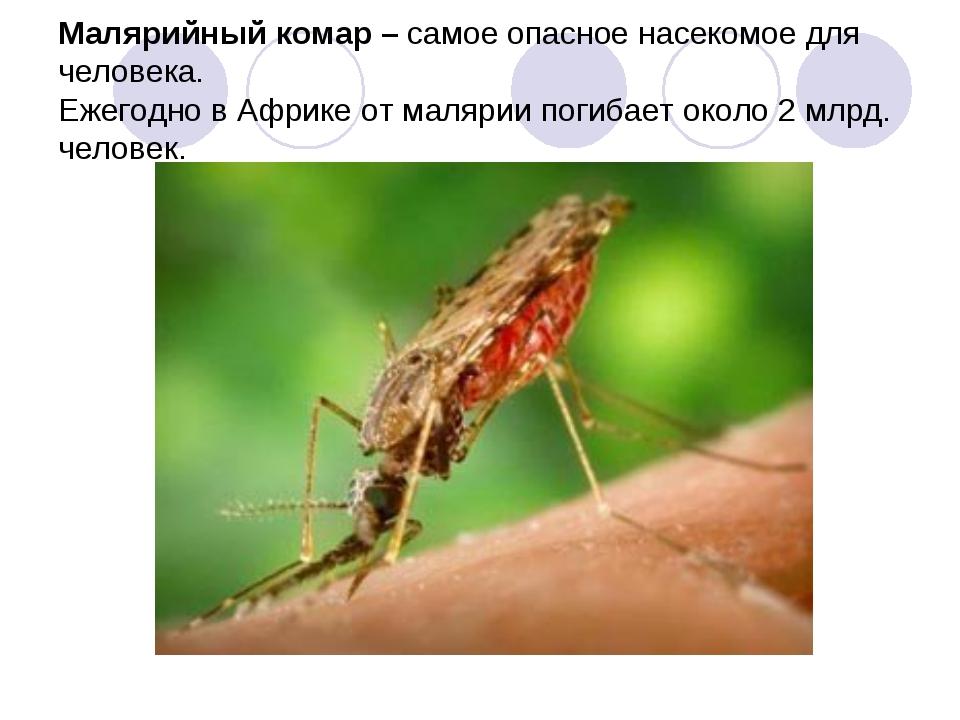 Малярийный комар – самое опасное насекомое для человека. Ежегодно в Африке о...