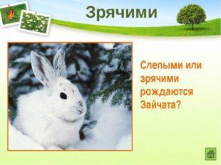 Это животное строго охраняется в Ивановской области. Назовите его. Выхухоль