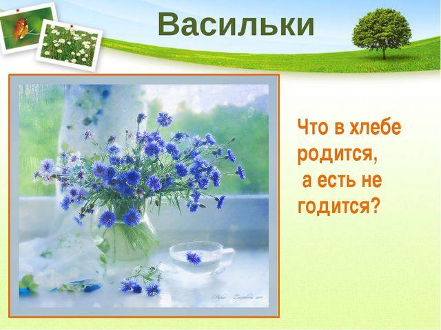 Какой цветок называют дикой рябинкой? Пижма