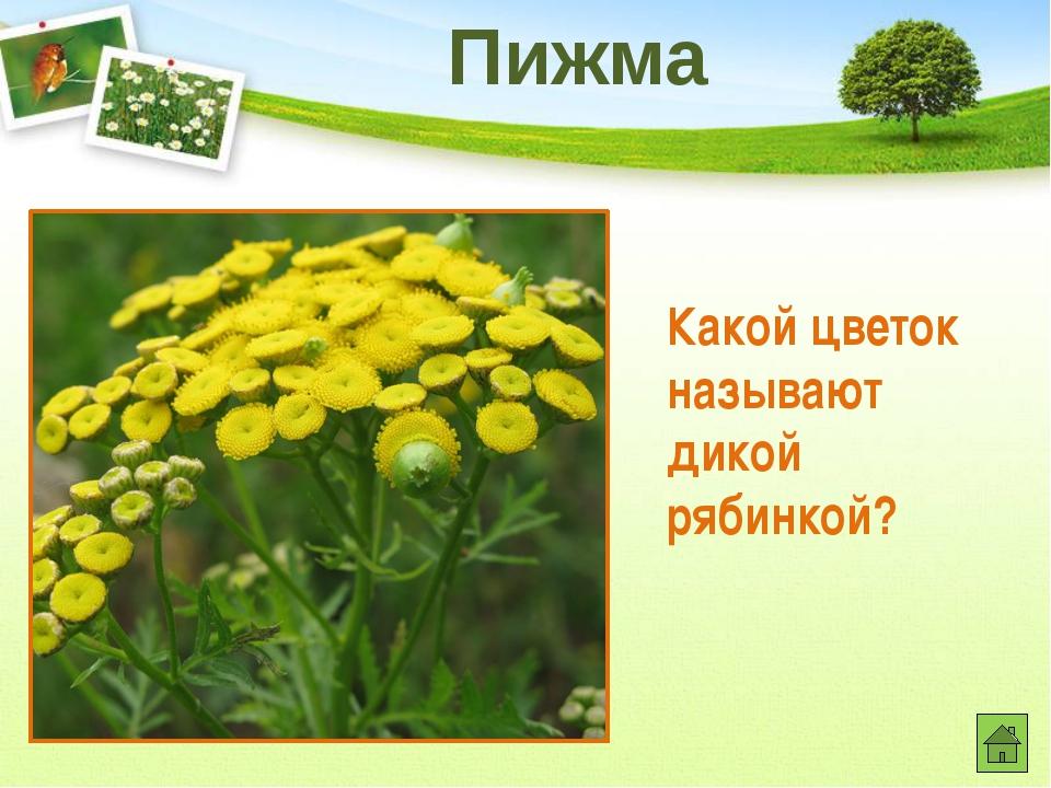 Какое дерево имеет признаки и хвойного, и лиственного и не гниющую древесину?...