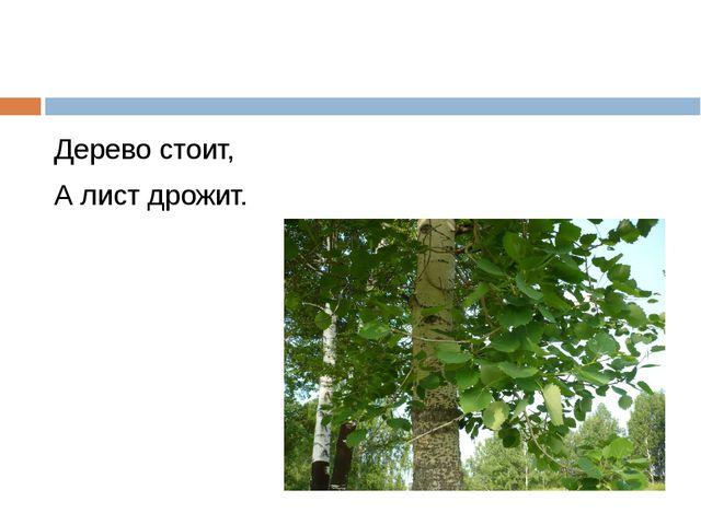 Дерево стоит, А лист дрожит.