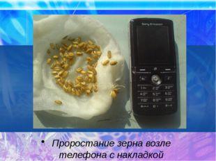 Проростание зерна возле телефона с накладкой
