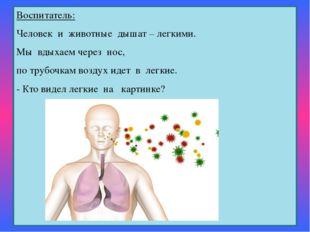 Воспитатель: Человек и животные дышат – легкими. Мы вдыхаем через нос, п