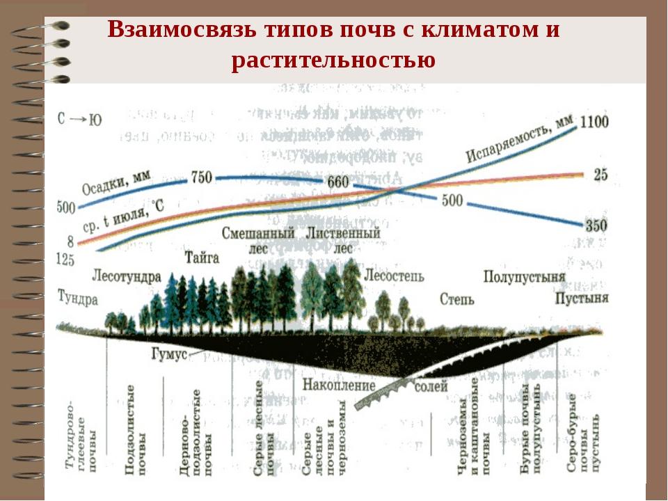 Взаимосвязь типов почв с климатом и растительностью