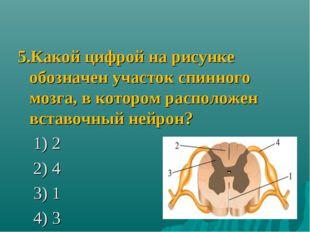 5.Какой цифрой на рисунке обозначен участок спинного мозга, в котором располо