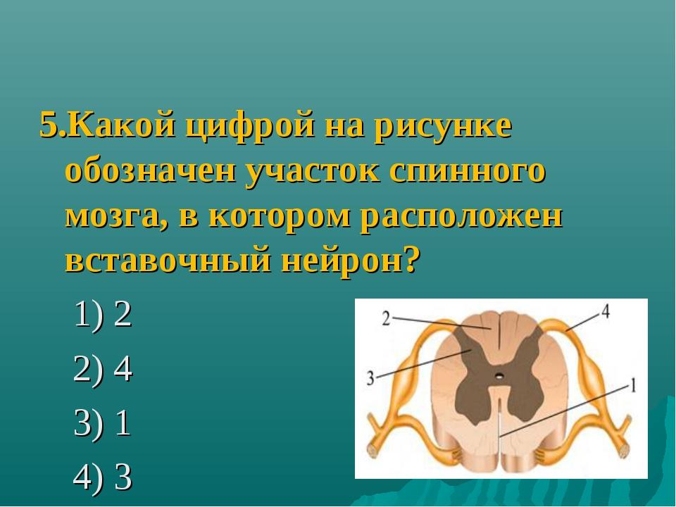 5.Какой цифрой на рисунке обозначен участок спинного мозга, в котором располо...