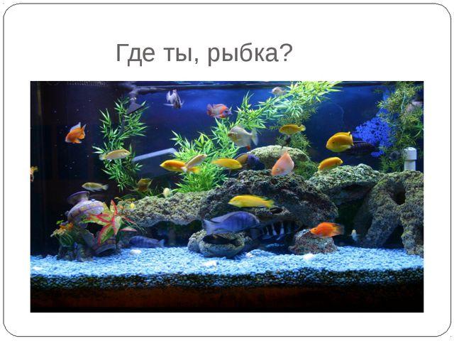 Где ты, рыбка?