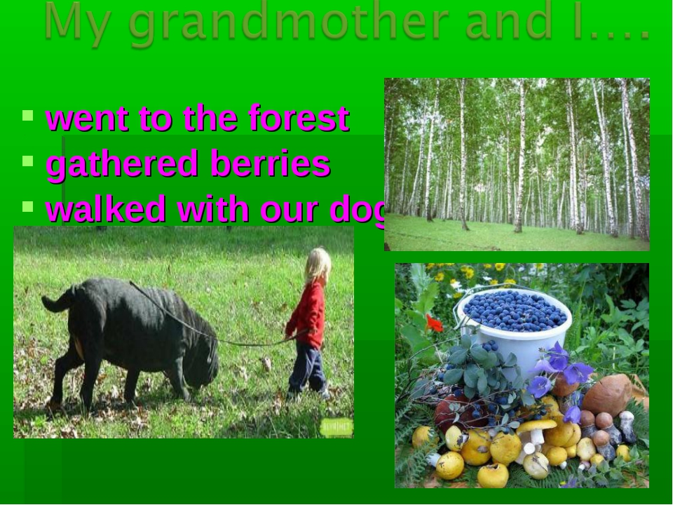 went to the forest gathered berries walked with our dog
