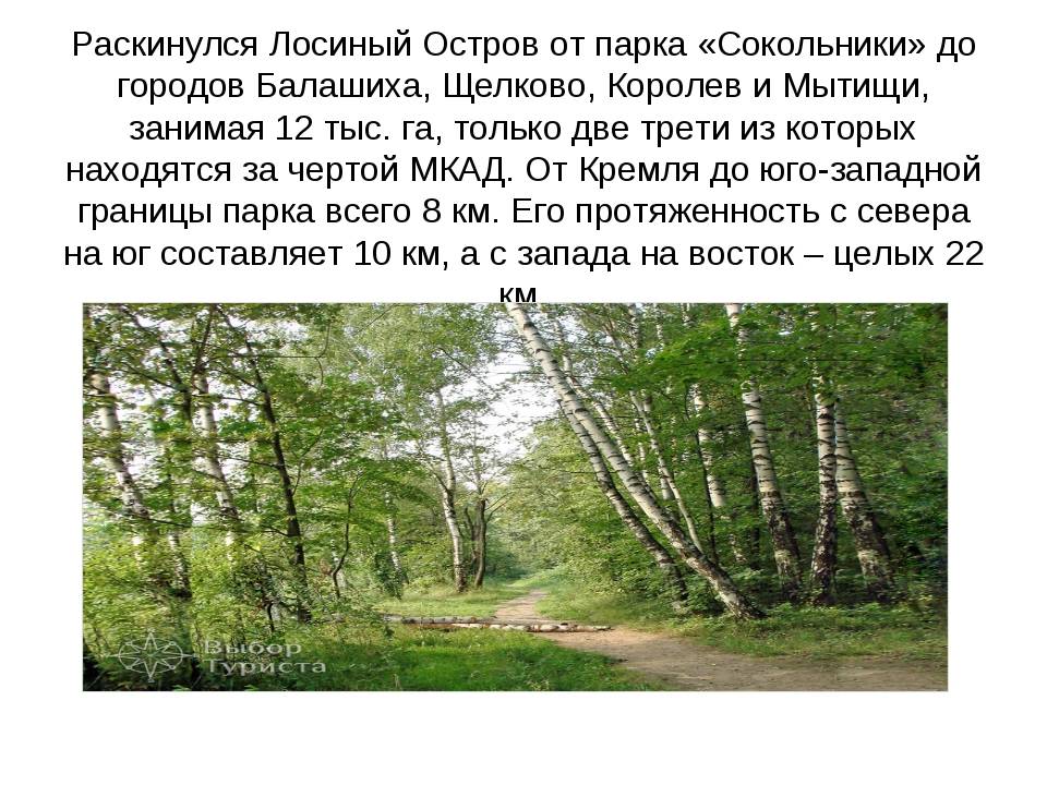 Раскинулся Лосиный Остров от парка «Сокольники» до городов Балашиха, Щелково,...
