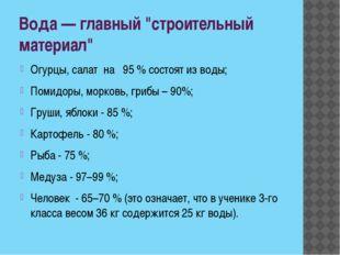"""Вода — главный """"строительный материал"""" Огурцы, салат на 95 % состоят из воды;"""