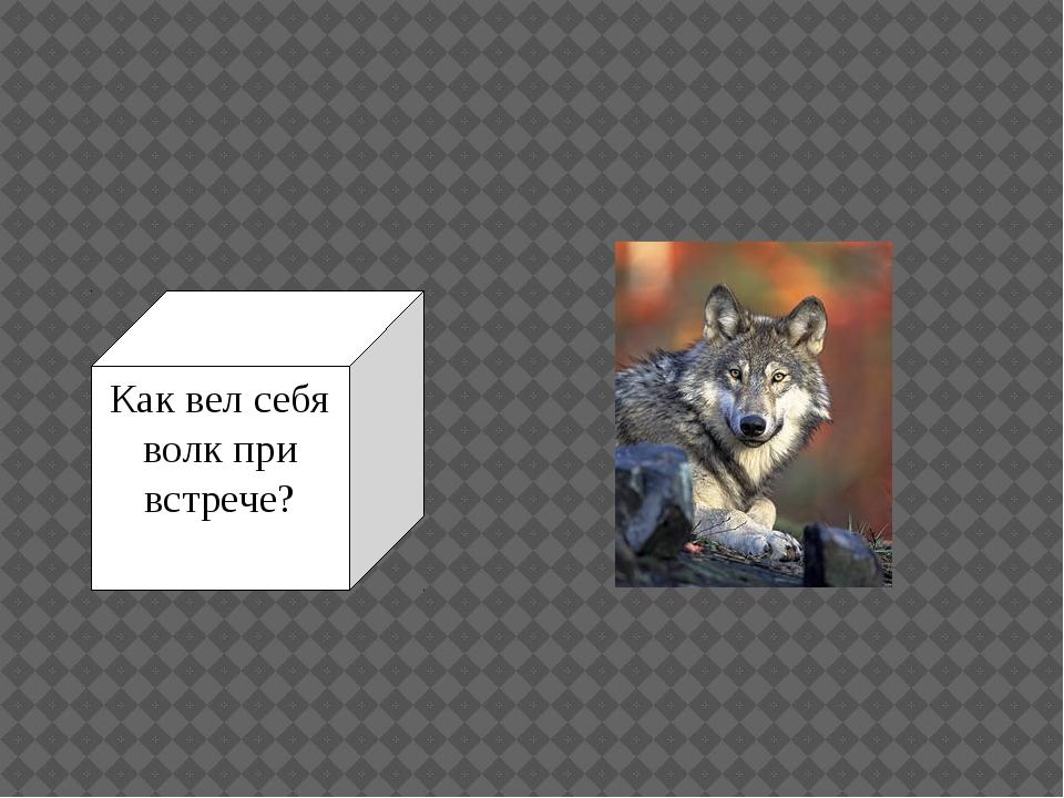 Как вел себя волк при встрече?
