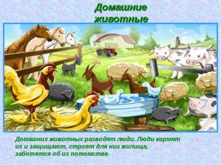 Домашних животных разводят люди. Люди кормят их и защищают, строят для них жи
