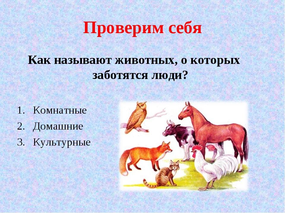 Проверим себя Как называют животных, о которых заботятся люди? Комнатные Дома...