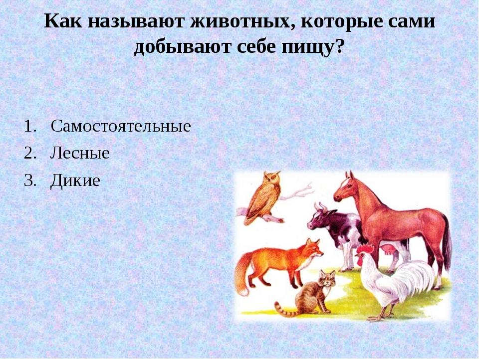 Как называют животных, которые сами добывают себе пищу? Самостоятельные Лесны...