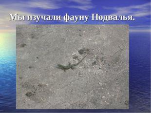 Мы изучали фауну Подвалья.