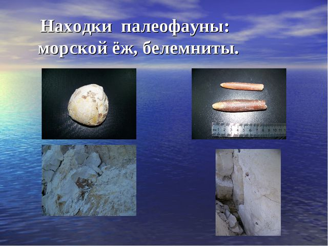 Находки палеофауны: морской ёж, белемниты.