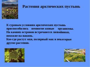 Растения арктических пустынь К суровым условиям арктических пустынь приспособ