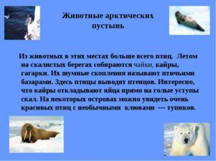 Животные арктических пустынь Из животных в этих местах больше всего птиц. Лет