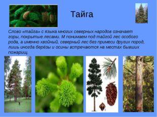 Тайга Слово «тайга» с языка многих северных народов означает горы, покрытые