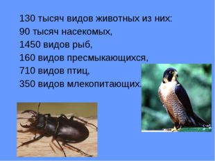 130 тысяч видов животных из них: 90 тысяч насекомых, 1450 видов рыб, 160 вид