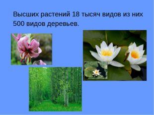 Высших растений 18 тысяч видов из них 500 видов деревьев.