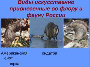 Виды искусственно привнесенные во флору и фауну России Американская ондатра е