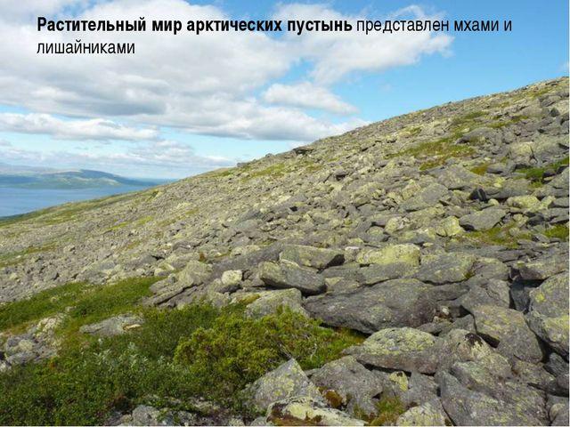 Растительный мир арктических пустынь представлен мхами и лишайниками