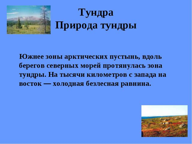 Тундра Природа тундры Южнее зоны арктических пустынь, вдоль берегов северных...