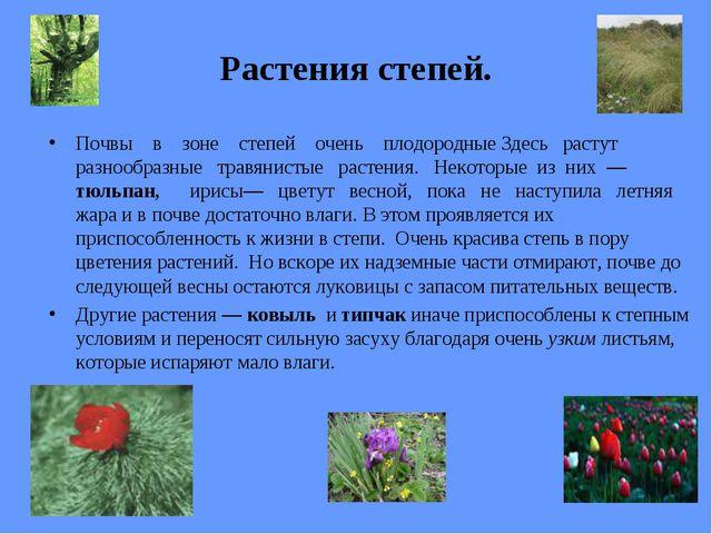 Растения степей. Почвы в зоне степей очень плодородные Здесь растут разнообра...